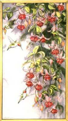hummingbirdsandfuschia.jpg